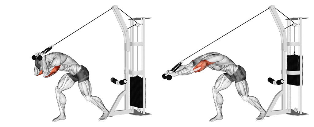Arms Day - Strength and Mass