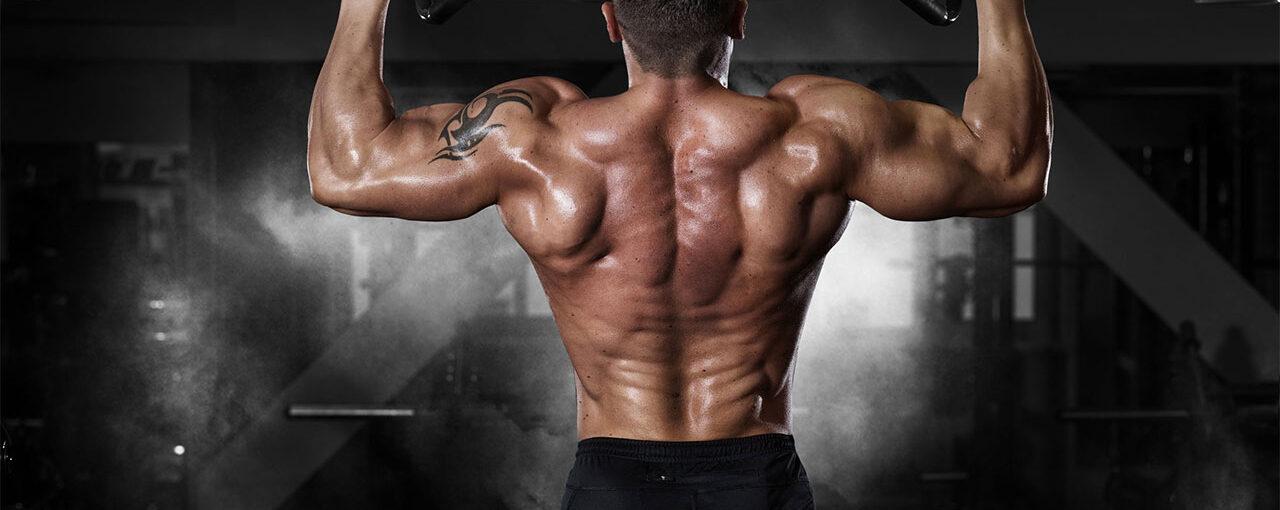 Oak Back Workout