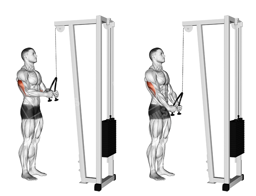Cable rope pushdowns