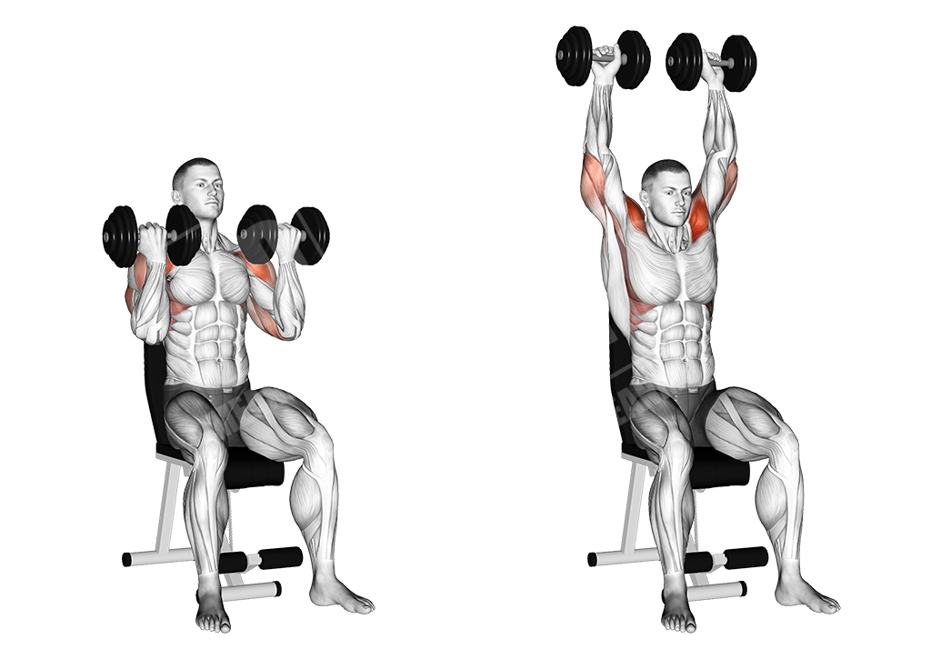 dumbbell arnold press wrist supinated